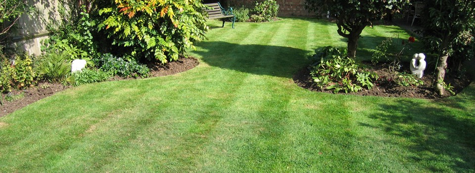 Basic Tips You Need to Know About Your Lawn Care Maintenance