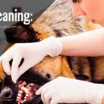 Ultrasonic Teeth Cleaning:  Doing More Harm Than Good?